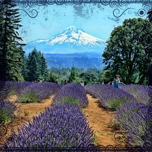 Mt. Hood and Lavender Fields