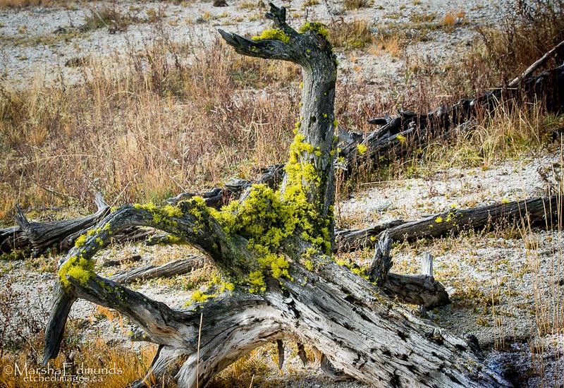 Vibrant Lichen Flourishing On the Fallen