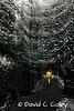Inside a Glacier Cave