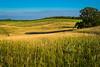 Fields and Prairies