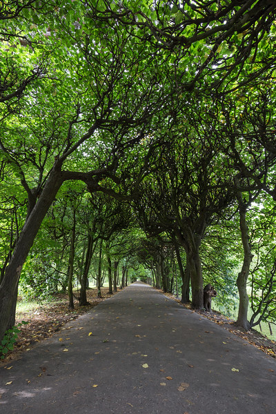Tree alley at the Oliwa Park