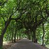 Tree alley at the Oliwa Park