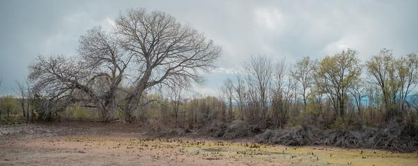 Dry Acequia Pond