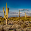 Late Afternoon Light at the Superstition Mountains, Arizona