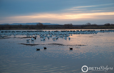 Sunrise at Bosque del Apache1