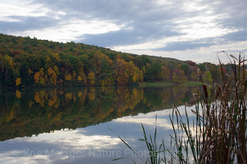 """""""Reflections In Fall"""""""