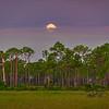 Full moon setting at sunrise at Babcock Wildlife Management Area near Punta Gorda, Florida