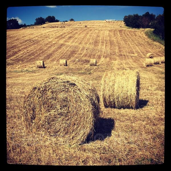 Summertime in Tuscany, hay bales, Montespertoli, Tuscany, Italy