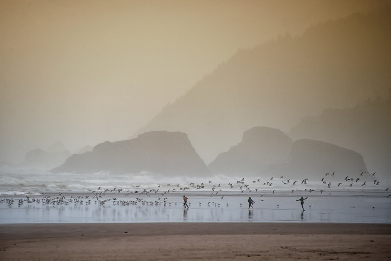Scattering the Seagulls, Cannon Beach, Oregon