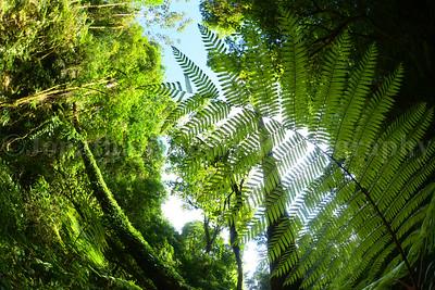 Jungle Brilliance