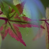 Day #283 - Fall Leaves