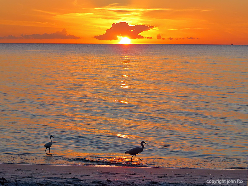 Sunset with egrets