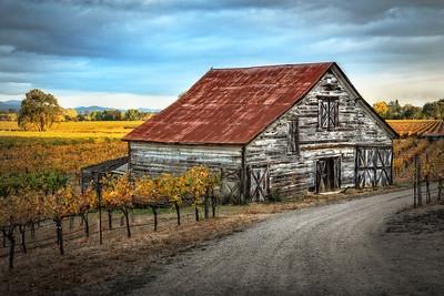 Fall Vineyard, Dry Creek Valley, Sonoma County, California