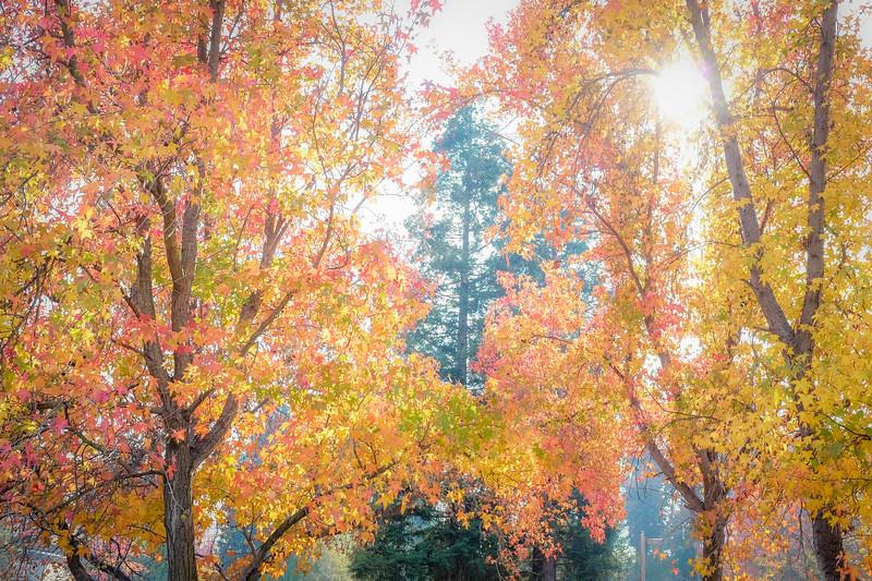 A blast of fall