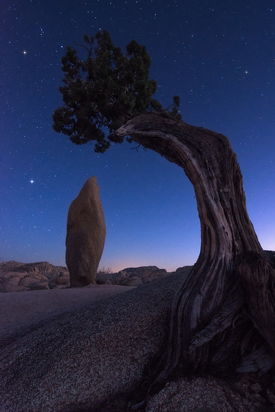 Leaning Juniper and Standing Rock