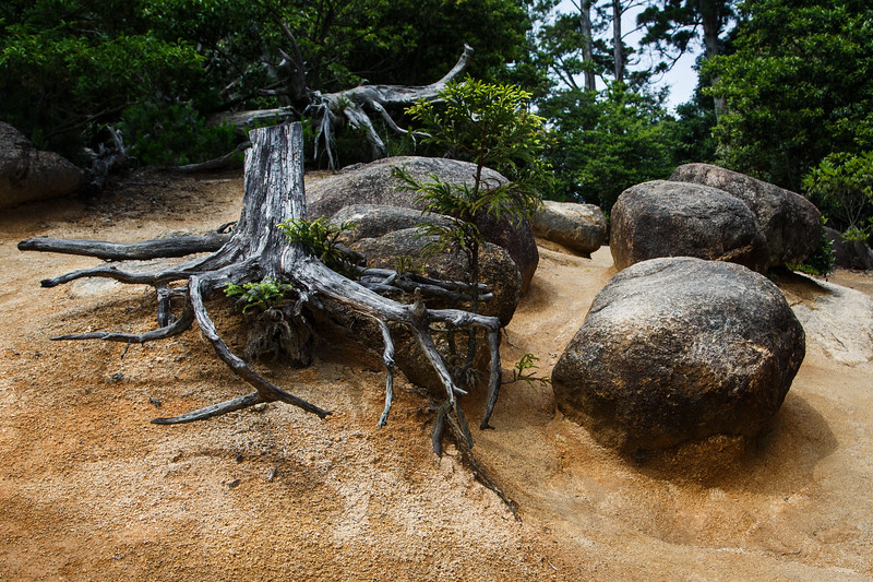 Tree, rocks, sand