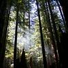 Light through Yonder Trees