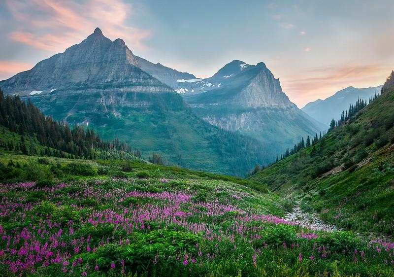 Wildflower Meadow - Glacier National Park