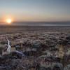 Timbered Island Sunrise
