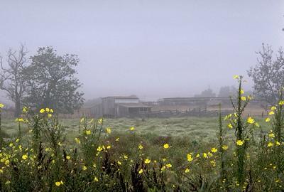 Old Barn, San Marcos, Ca