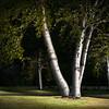 Birch Grove, Onteora