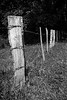 Fence in B&W