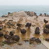 Mushroom Rocks
