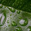 Day #298 - Raindrops