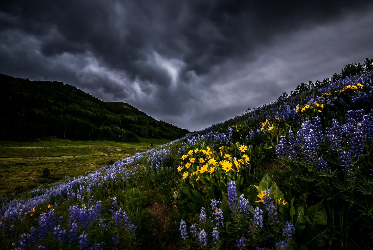 (B)looming Storm