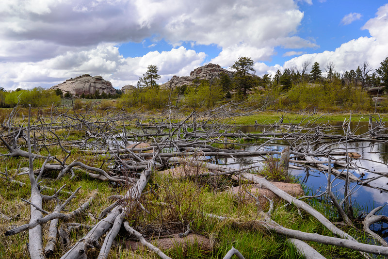 The Hills Are Alive with the Sound of Beavers