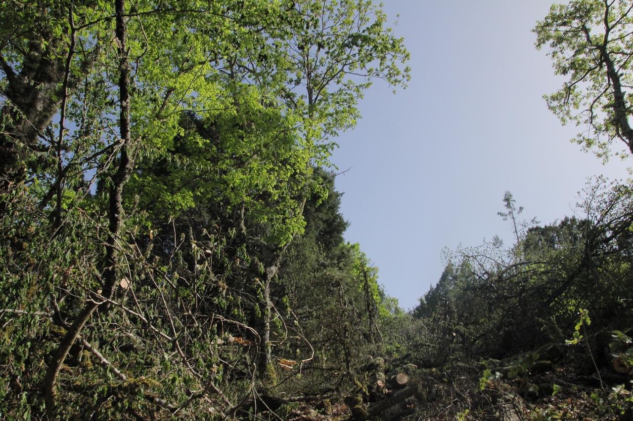 Juniperus forest Junex