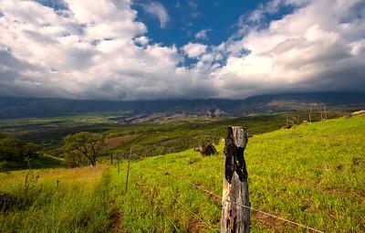 Maui Meadows