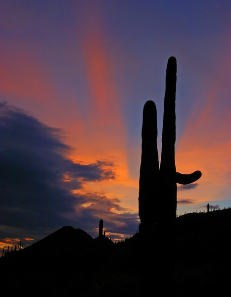 Suguaro Sunset, AZ