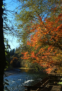 Falltime on the Bogachiel River in Forks, Washington