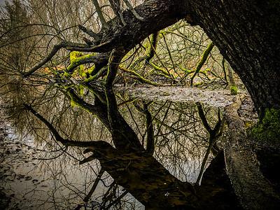 Tangled Reflections II