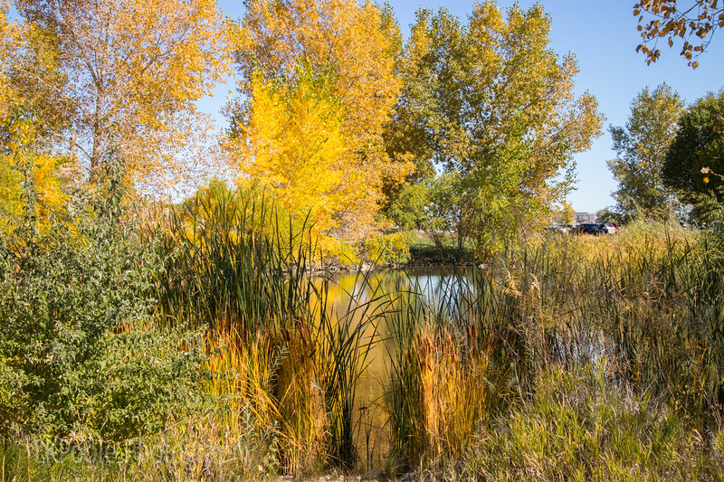 Fall on the Pond