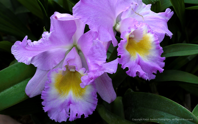 Orchid Show 2018_01