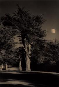Summer Moon, Sea Ranch, California