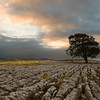 A lone Hawthorn tree on limestone pavement outside Malham, Yorkshire