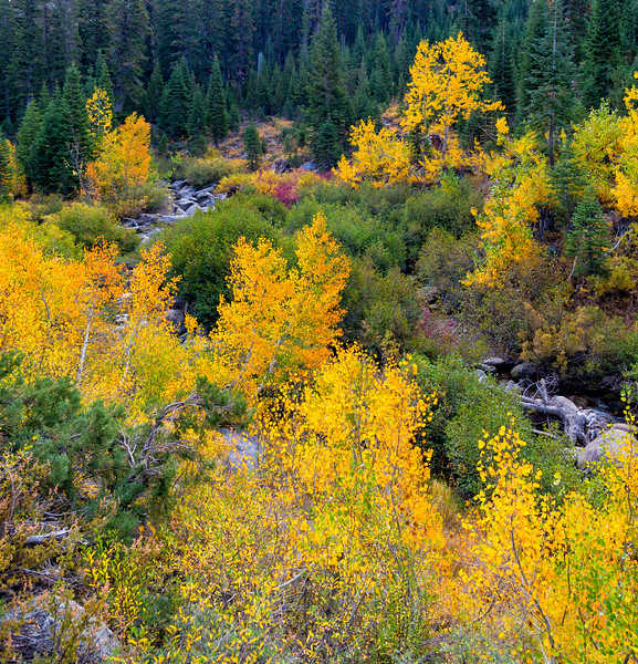 Deadman Creek Morning Fall Colors - Sonora Pass-10