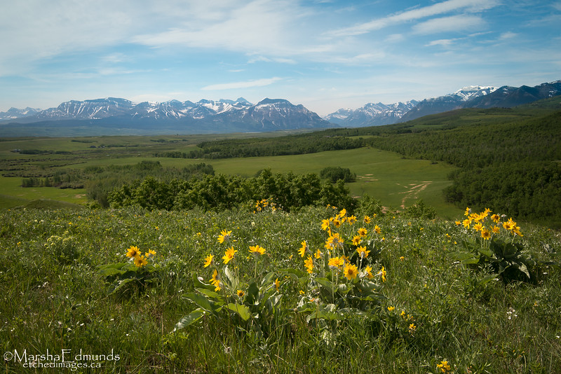 Where the Rocky Mountains Meet the Prairie