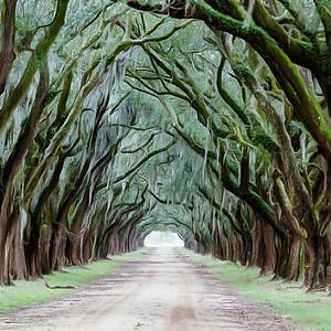 Avenue of live oaks in Louisiana