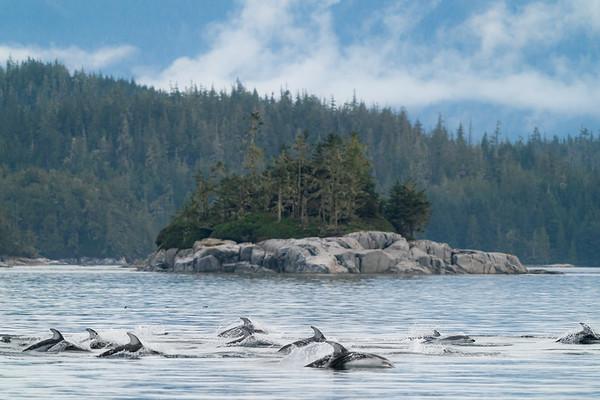 Dolphin Parade