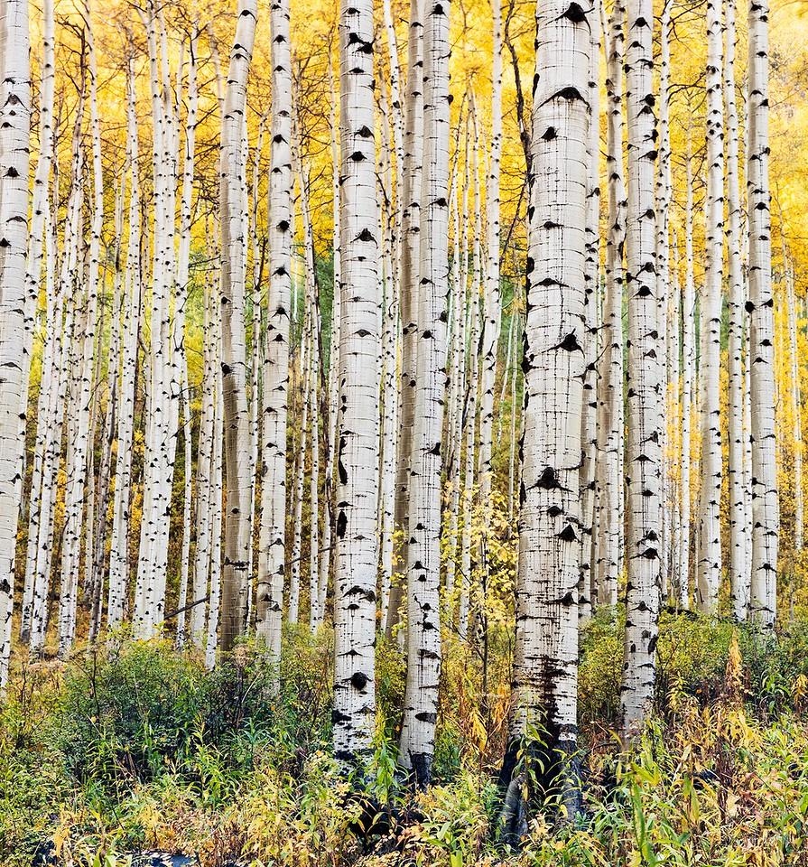KEBLER GOLD – October 1, 2015, Kebler Pass, Colorado