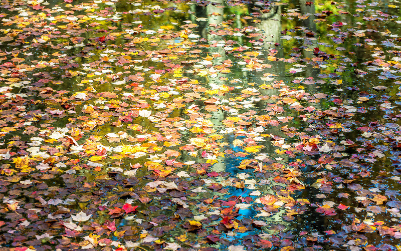 Autumn leaves with blue reflection