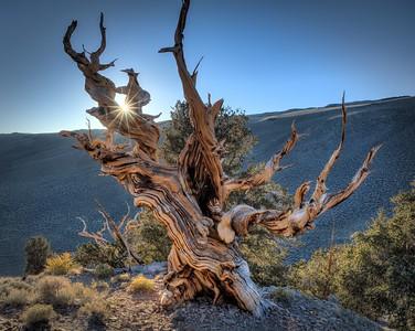 Sol Catcher, White Mountains, California