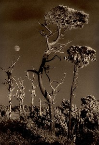 Ravens Roost, Point Arena, California
