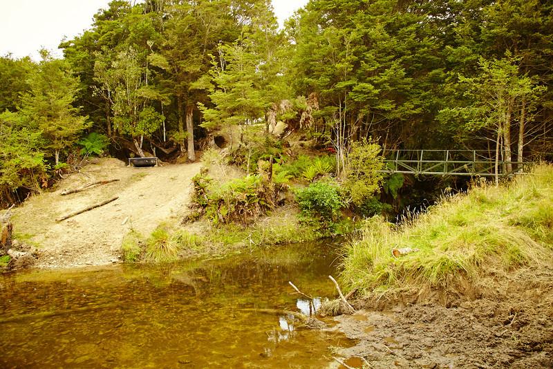 """Bushwalk""  Tuatapere, NZ"