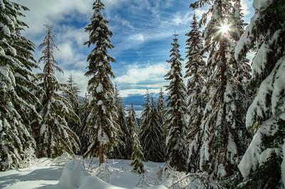 Gold Creek Snowscape