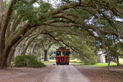 Tram parked under live oak trees at Charleston Tea Plantation